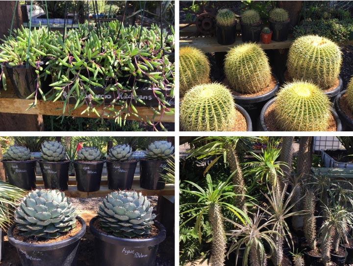 cactus-home